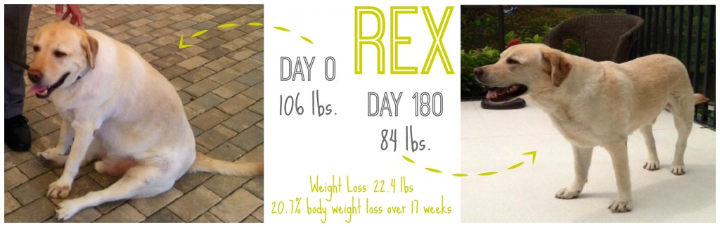 At-The-Fire-Hydrant-Hills-Metabolic-Rex-Success