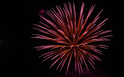 image for Fireworks and Your Dogs